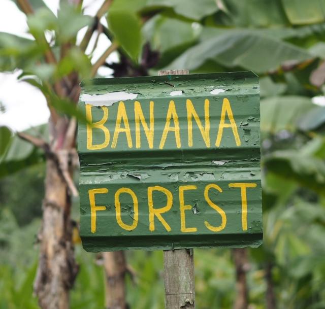 Banana Forest, Bollywood Veggies, Singapore