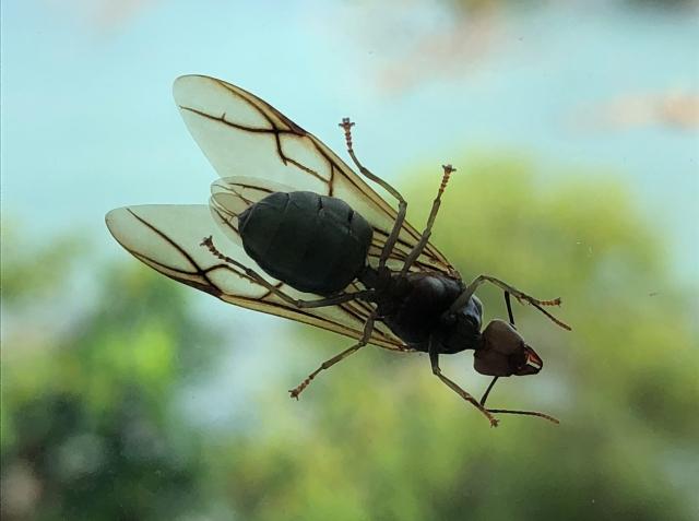 Bugs at Montigo Resorts, Batam