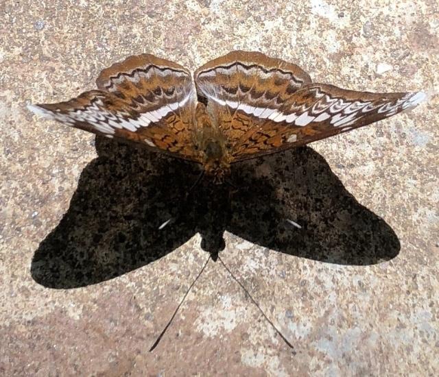 butterfly hill pulau ubin