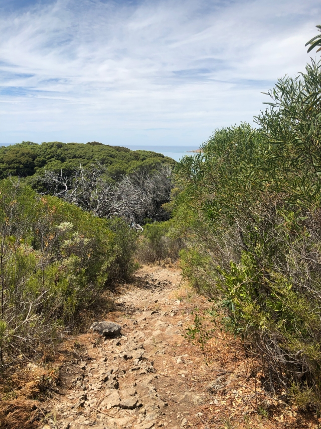 Taking the wrong path to the Cape Naturaliste Lighthouse...