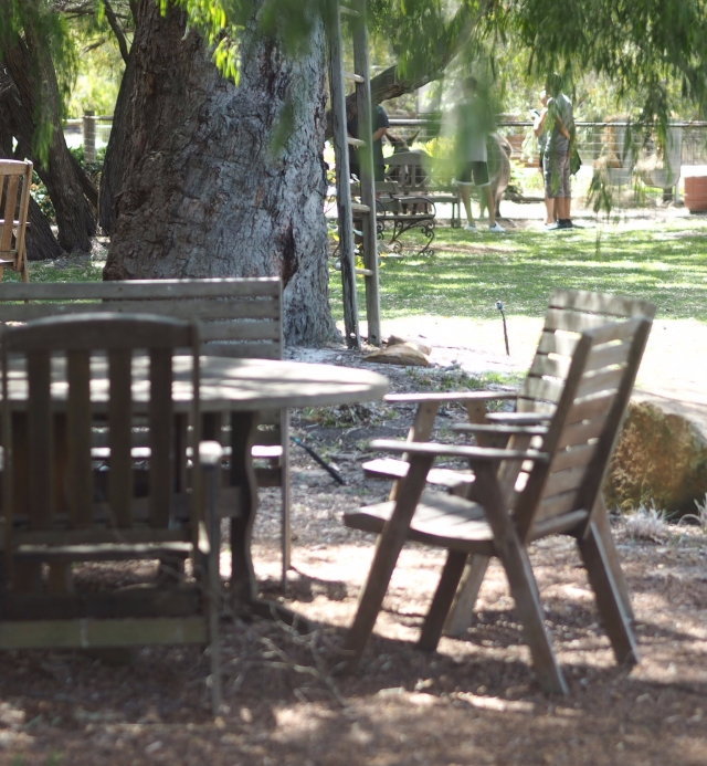 Under the trees at the Olive Grove Margaret River