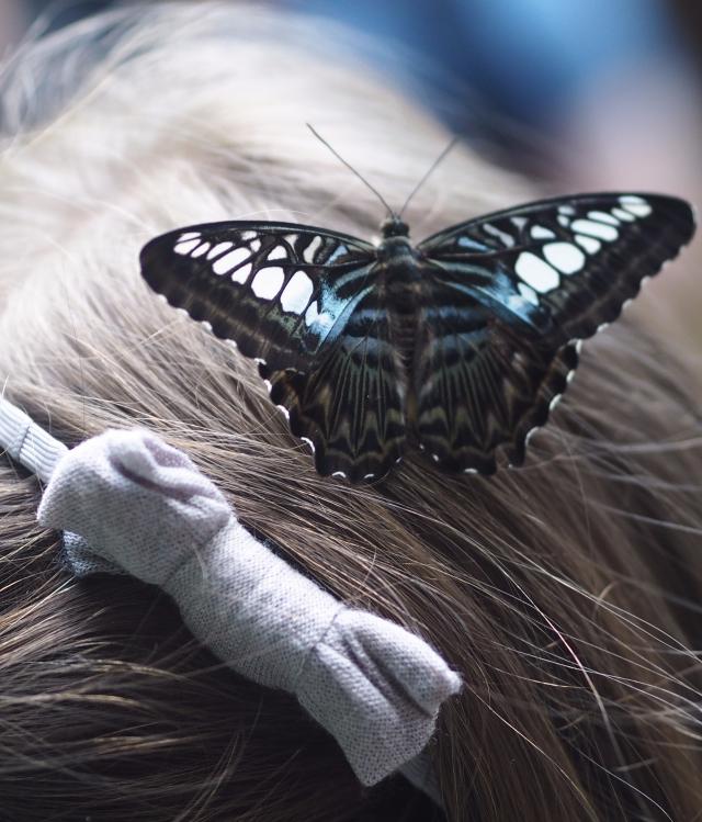 Butterfly at Entopia, Penang