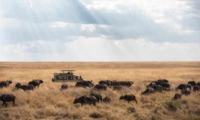 Safari in Africa, Serengeti